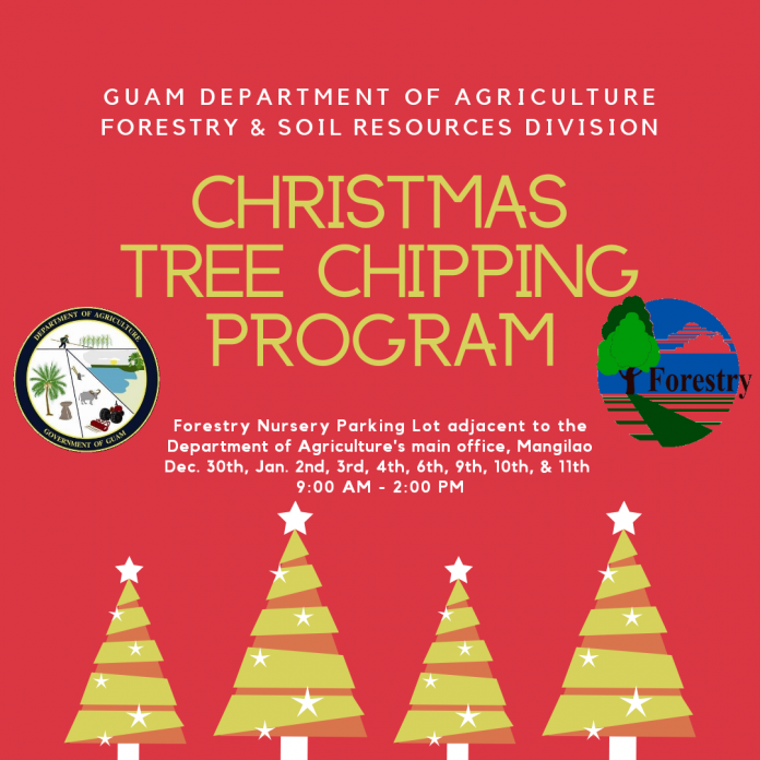 Disposing Of Christmas Trees: Department Of Agriculture Christmas Tree Chipping Program